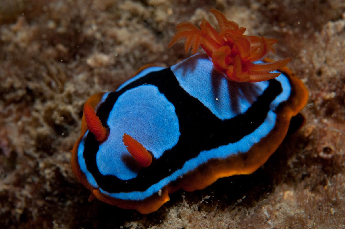 home australian marine sciences association