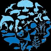 2015 Geelong   Australian Marine Sciences Association